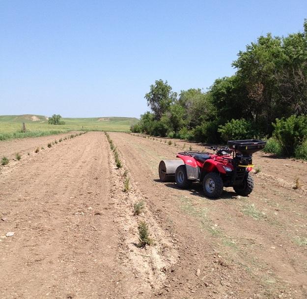 seeding pic